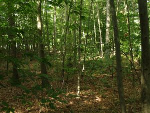 Picture of Mid-Atlantic Mesic Mixed Hardwood Forest