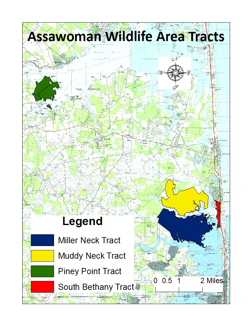 Picture of Assawoman Wildlife Area Tracts