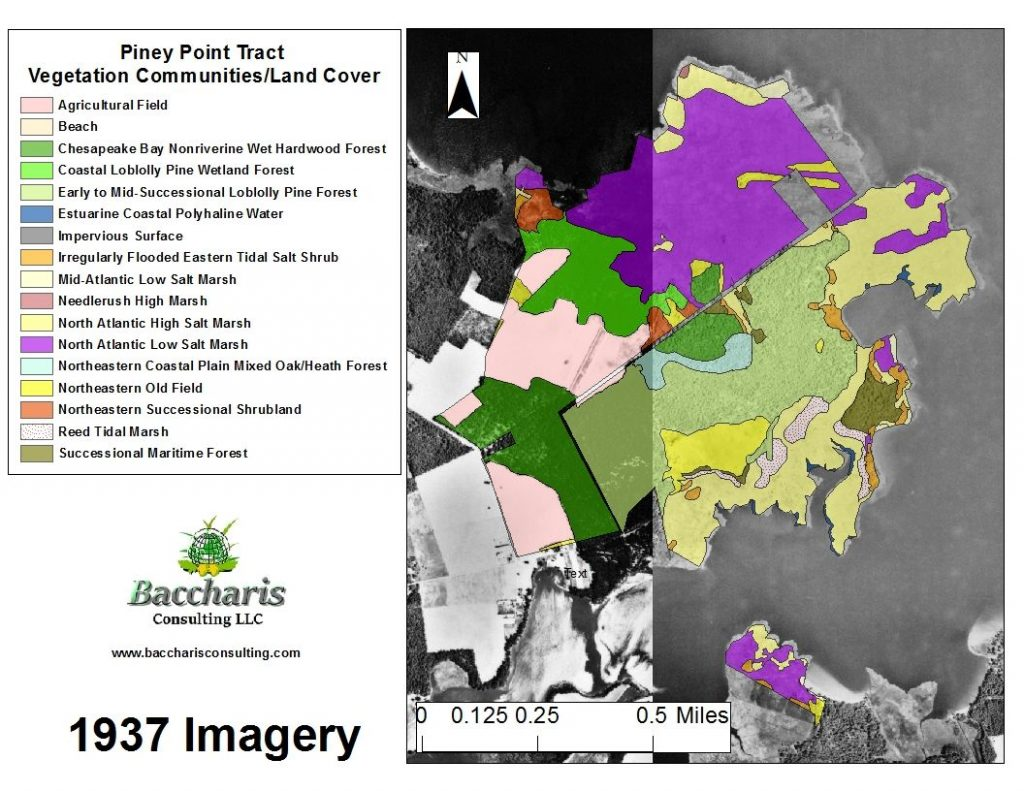Piney Point Tract Vegetation Community/Land Cover Maps